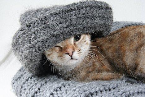 Katte dumpes i stor stil