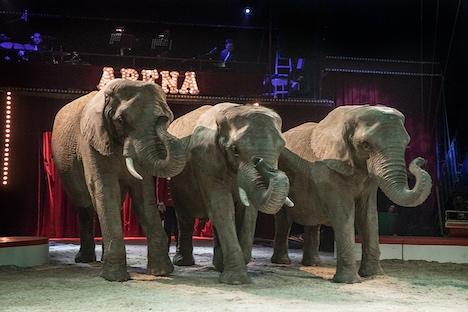 Se de pensionerede cirkuselefanters logi